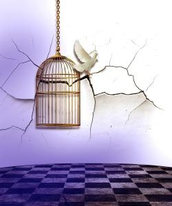 birdcage-454467_1920